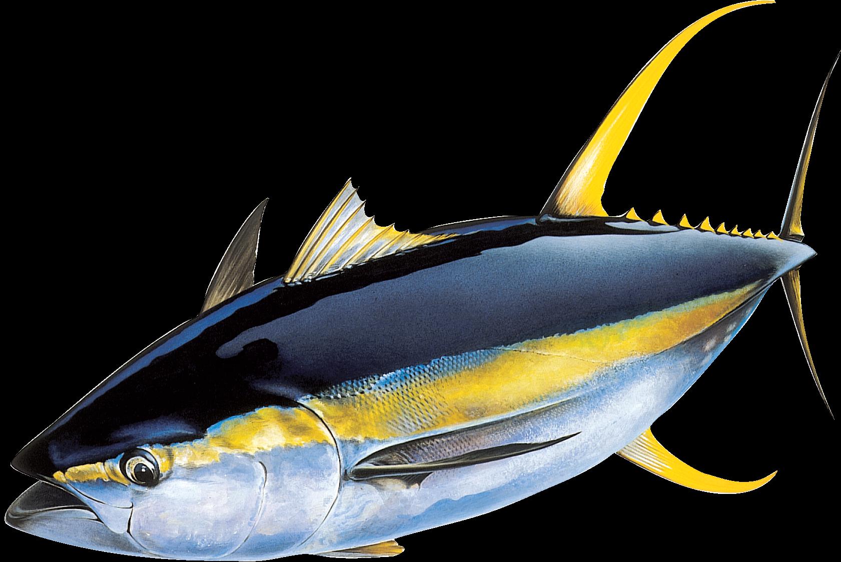 Tuňák žlutoploutvý